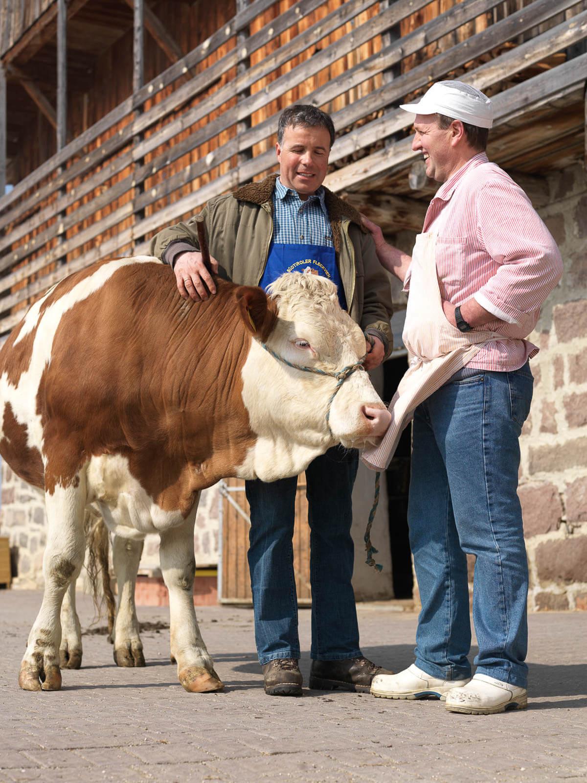 Metzgerei Silbernagl beim Einkauf einheimischer Rinder